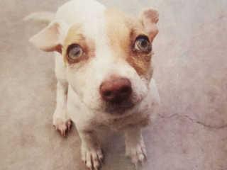 EUA california cachorrodrogas H
