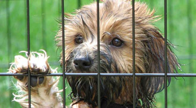 Filadélfia proíbe venda de cães em lojas de animais