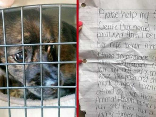 Cachorrinha com paralisia é entregue para adoção com bilhete: 'Por favor, ajude', na Flórida, EUA