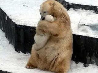 EUA foto mae ursa abracando bebe zoologico H