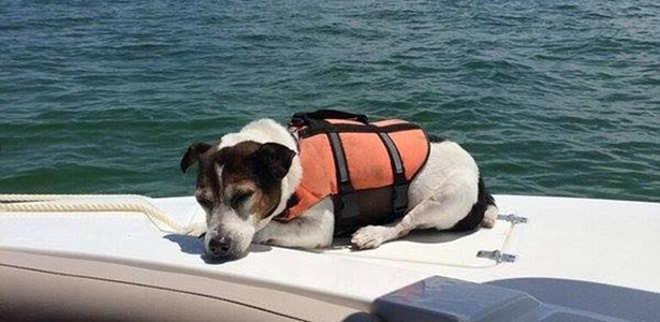Cão com colete salva-vidas é resgatado depois de 3 horas em alto-mar
