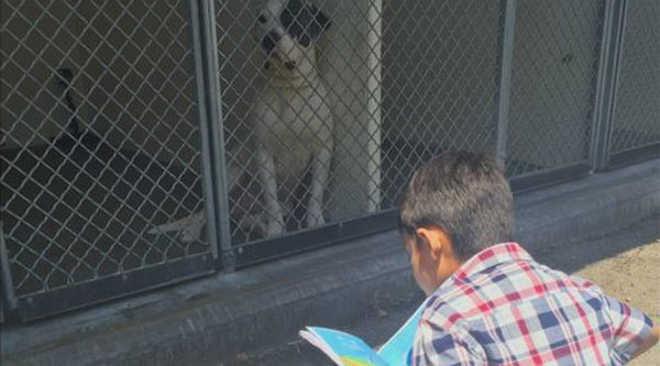 Menino autista lê estórias a cães abandonados