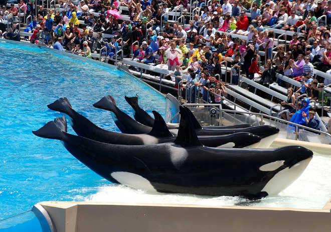 EUA santuario orcas seaworld