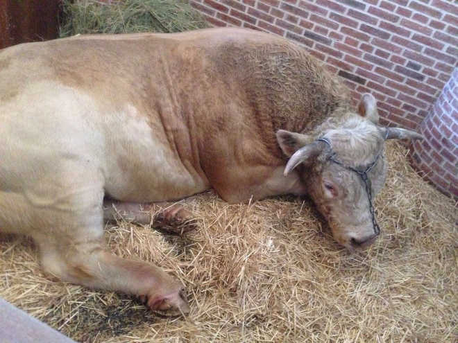ONG leva aos tribunais o caso da aparição de um touro em uma ópera