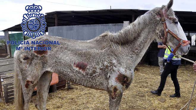 Espanha morte treze cavalos