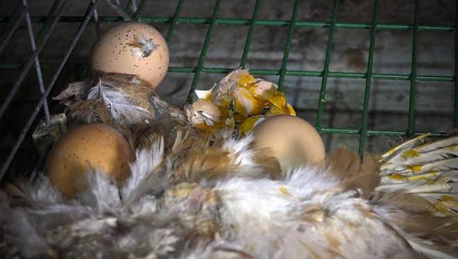 Franca video maus-tratos animais chocar
