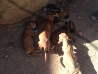 Residência com cachorros abandonados têm 3 mortos e 4 em situação precária em Aragarças, GO