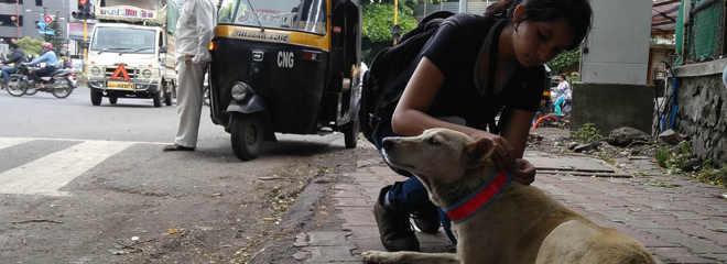 ONG coloca colares reflexivos em animais de rua para salvá-los de atropelamentos