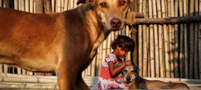 India amantes animais alimentam caes