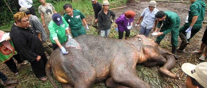 Elefante chorando gera petição para fechar 'Zoo da Morte' na Indonésia