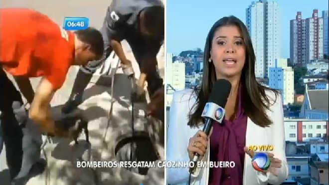Bombeiros resgatam filhote jogado em bueiro, em Belo Horizonte, MG