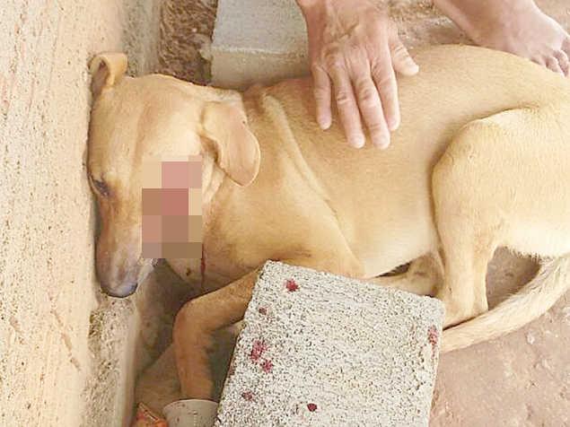 Cadela de rua é esfaqueada em São João Batista do Glória, MG