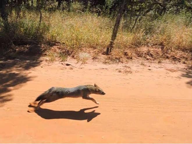 Polícia de Meio Ambiente resgata três animais silvestres em Uberlândia, MG