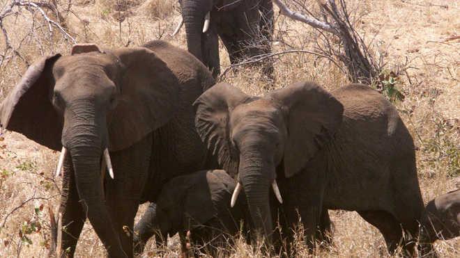 MOCAMBIQUE elefantes 2016 05 12 RTXKSQU