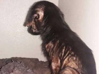 Mais casos de maus-tratos a animais foram denunciados junto a APAC em Caarapó, MS