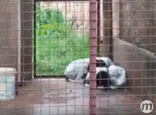 MS CampoGrande cachorros expostos chuva