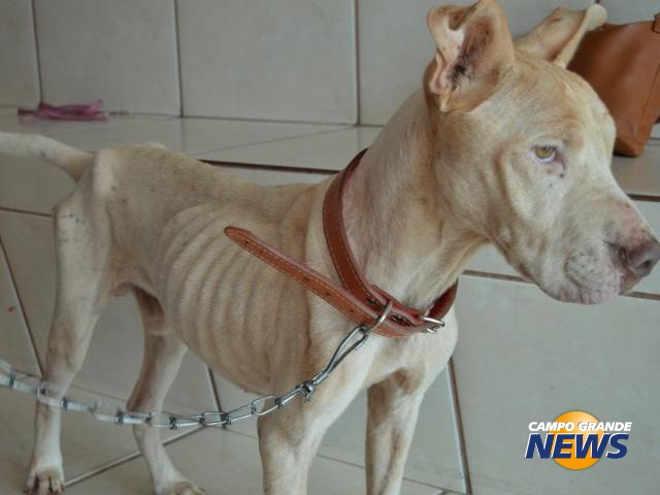 Todos querem Bolt: resgate de cão debilitado vira caso de polícia