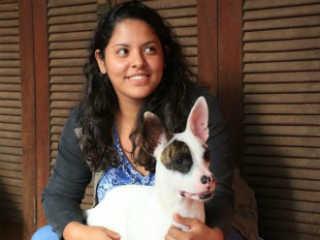 Com 17 cães em casa, estudante faz campanha para produzir casinhas pet