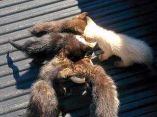 Moradores e protetores denunciam descaso das autoridades públicas com animais abandonados em Campo grande, MS