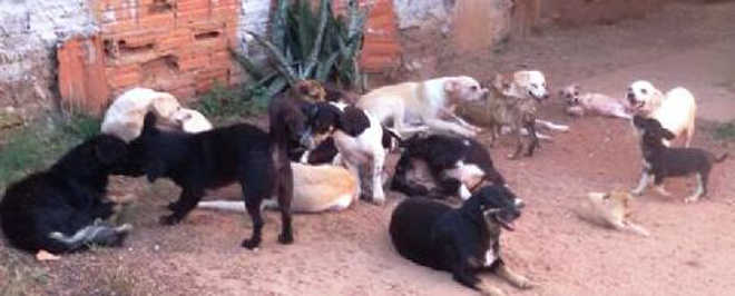Apesar de mobilização, mais de 20 cães precisam de ajuda para castração e adoção; veja como ajudar