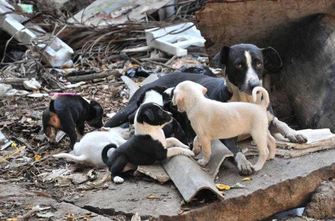 MT cuiaba stray dogs K Gopin 1582965f