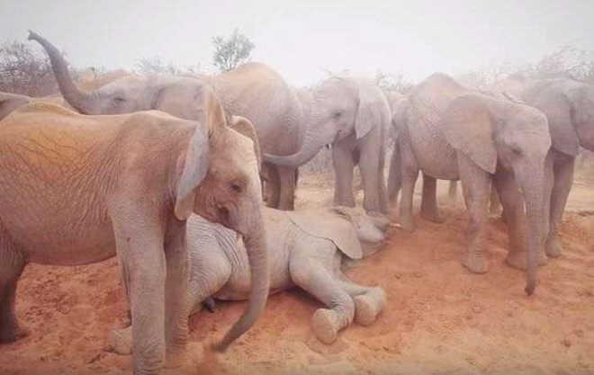 Mocambique suspensao comercio derivados elefantes