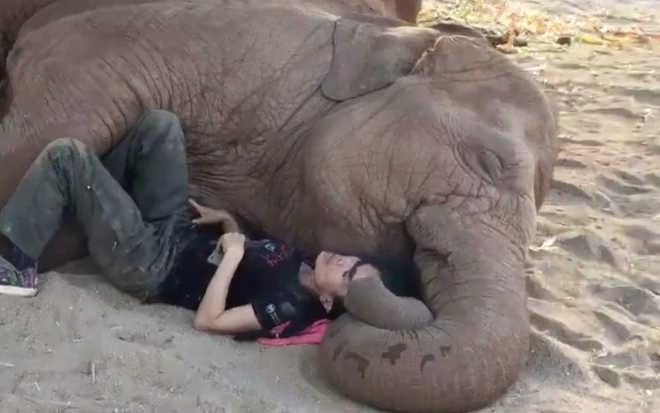 Mulher aconchega-se a elefante resgatado para ajudá-lo a sentir-se seguro