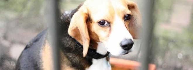 Pará proíbe uso de animais em testes de cosméticos