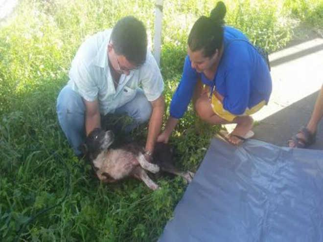 PB JoaoPessoa grupo resgata animais