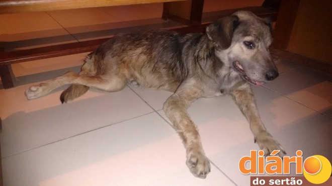 Depois de queimada viva, cadelinha pode ser expulsa de igreja na PB