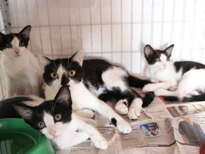 Feira disponibiliza cerca de 40 gatos para adoção na Prefeitura de Caruaru, PE