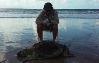 PE jaboatao tartaruga divulgacao