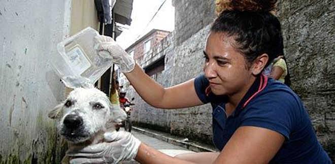 Cão é esfaqueado e depois salvo no Recife, PE