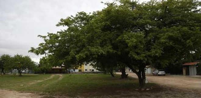 Praça com espaço reservado para cães será construída no Recife, PE