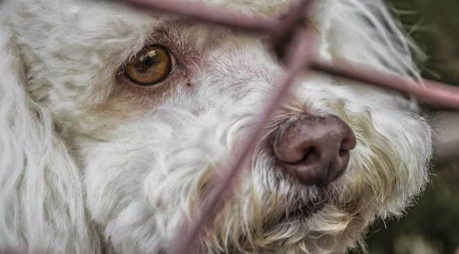 PR Icaraima mp construcao abrigo animais