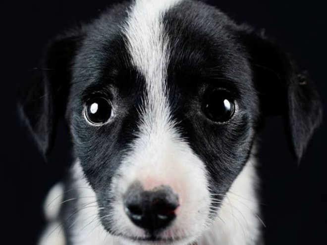 Books de cachorros resgatados fazem o número de adoções aumentar em Piraquara, PR