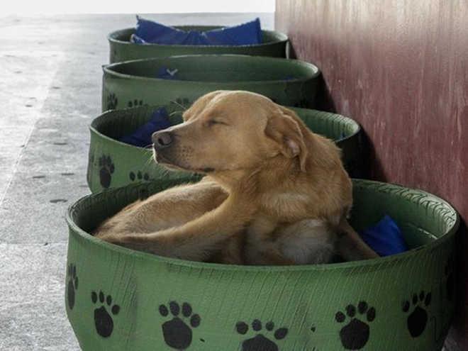 PR PontaGrossa vereador casinhas cachorros