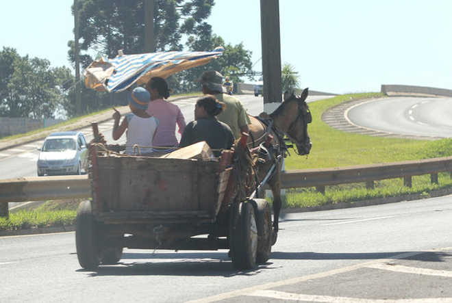 PR PontaGrossa vereador proibir cavalos carrocas