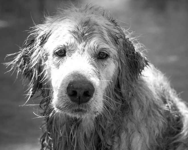 Vigilância Sanitária determina retirada de cobertores e dois cães morrem de frio em Londrina, PR