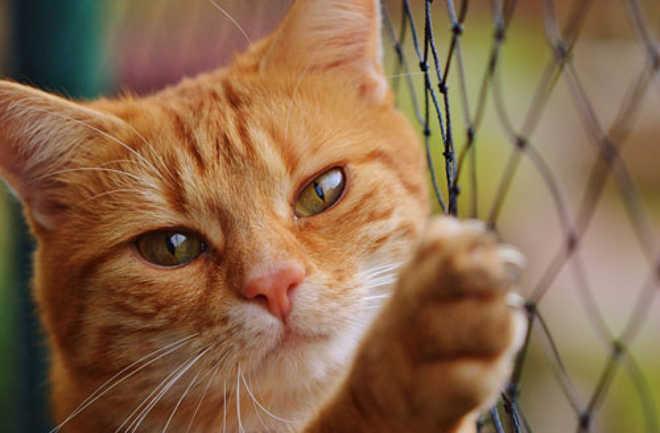 Feira para doação de animais acontece neste domingo em shopping de Londrina, PR