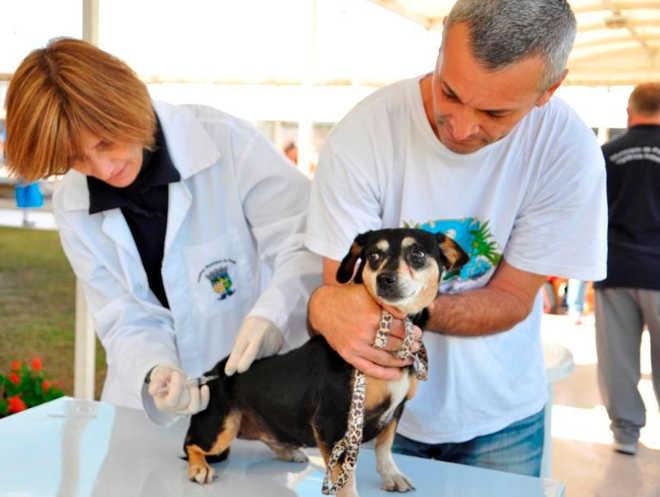 Em Pinhais (PR), 320 animais, entre cães e gatos, são imunizados contra a raiva
