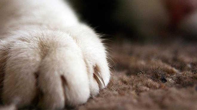 Mutilar não é tratamento: saiba o porquê de não extrair as unhas de seu gato