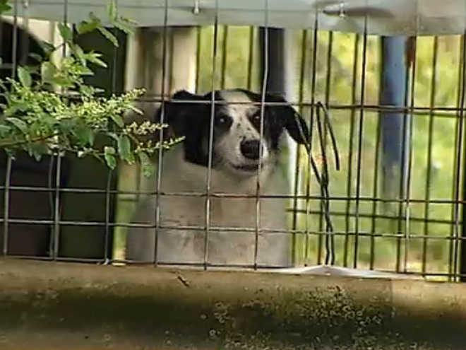 Abrigo em Portugal acolhe centenas de animais maltratados