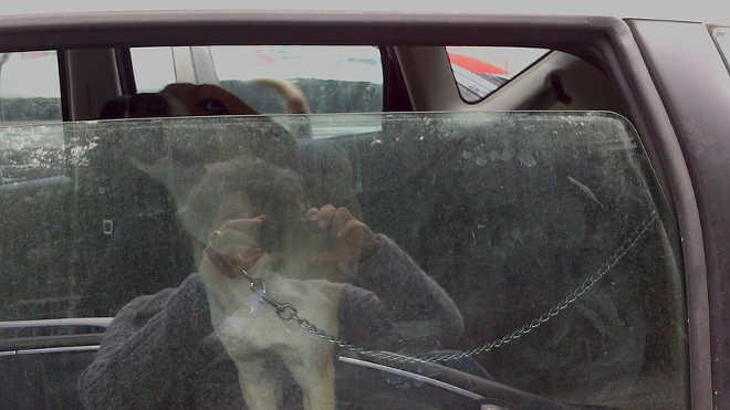 Cão acorrentado dentro de um carro gera revolta em Carcavelos, Portugal