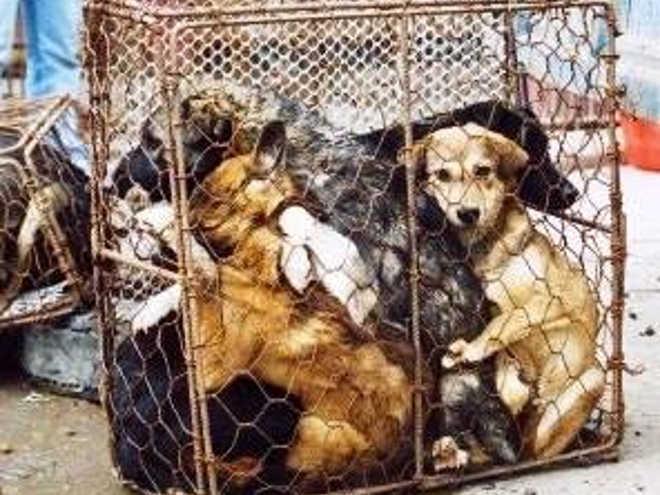 Boato de maus-tratos a cães no Santuário de Fátima e fotos chinesas voltam a incendiar redes sociais