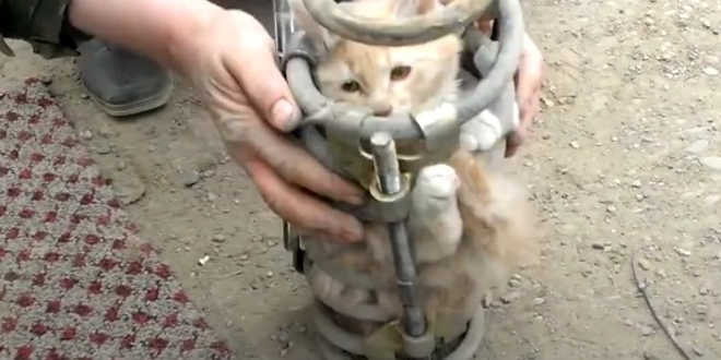 Portugal gato preso caminhao