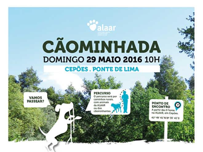 """Associação portuguesa promove """"cãominhada"""" para dar resposta a gastos mensais de 1500 euros com animais abandonados"""