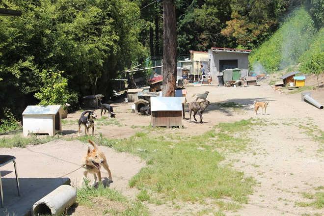 """Cães envenenados no Canil de Fafe, Portugal. """"Neste momento temos cães a morrer"""""""