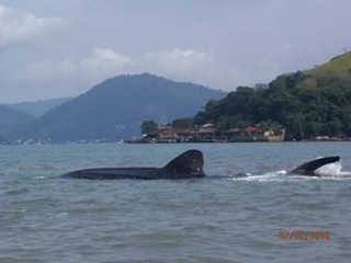 RJ angradosreis tubarao baleia
