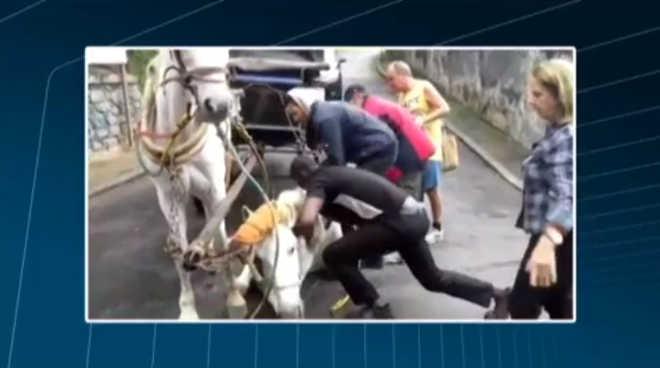 Cavalo de charrete turística cai e quase é enforcado; veja vídeo